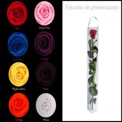 Rosas preservadas